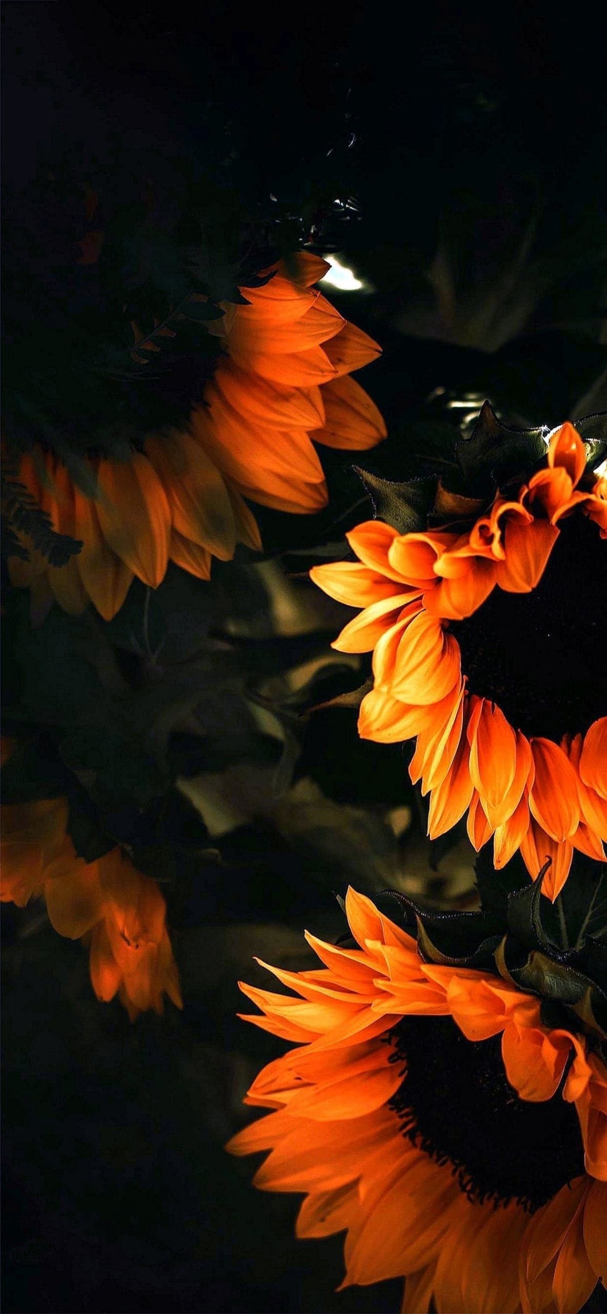 Pin on Sunflower Wallpapers For iPhone Xs Max