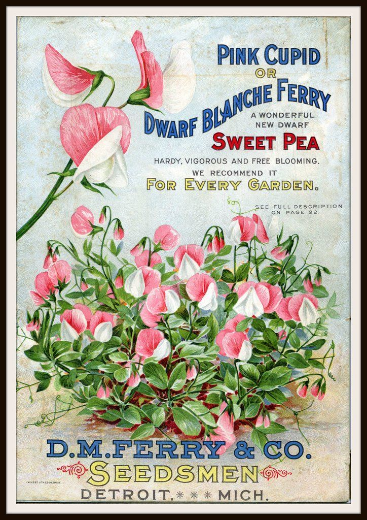 Vintage Reproduction Seed Pack Cover Art Print Wall Decor And Packets