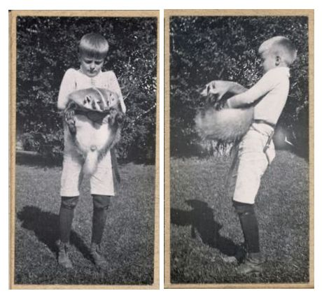 """Archie Roosevelt with pet badger, Josiah. Apparently badgers don't make very good pets … """"Teddy Roosevelt was visiting Sharon Sp."""
