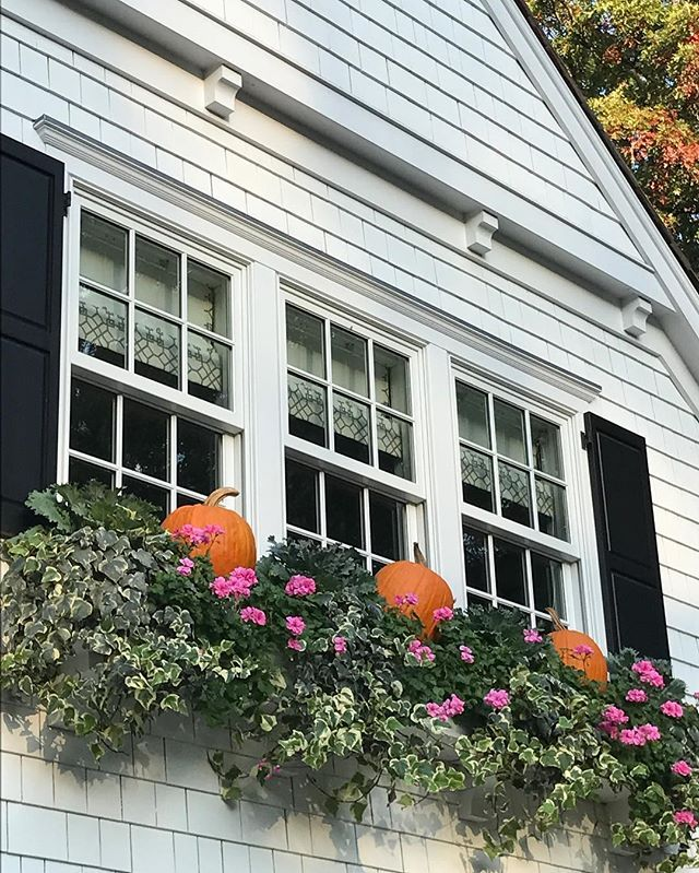 Sometimes we find the best things when we are looking up! #windowbox #fall #outdoordecor