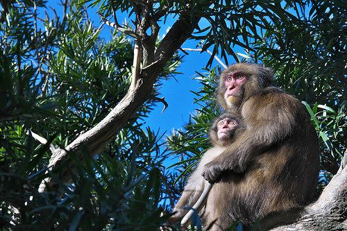 Mother and baby on the tree | Flickr - Photo Sharing!