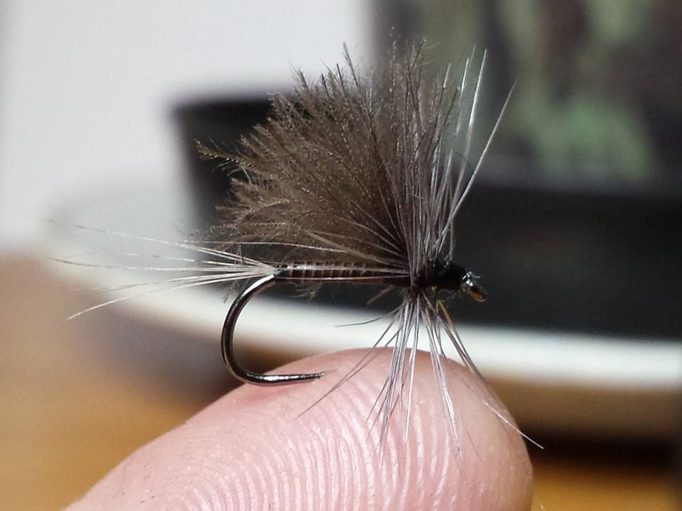 Large dark olive By Jérome Chicard