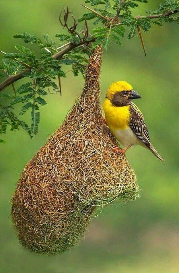 Pin By Tina Hoyer On Beautiful Birds Birds Colorful Birds Pretty Birds