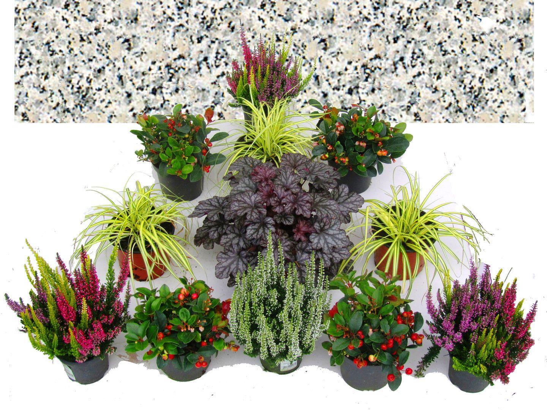 Grabbepflanzung Set Urnen- oder Einzelgrab Wechselbepflanzung Herbst - Winter bunt #friedhofsdekorationenallerheiligen