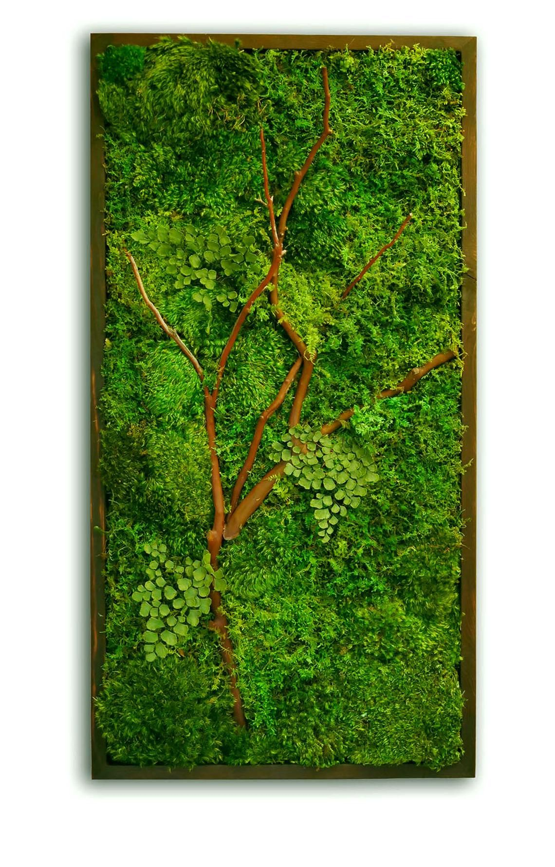 18×36″ Moss Wall Art with Manzanita branches. Real preserved zero-care green wall. Real preserved moss, ferns, and driftwood