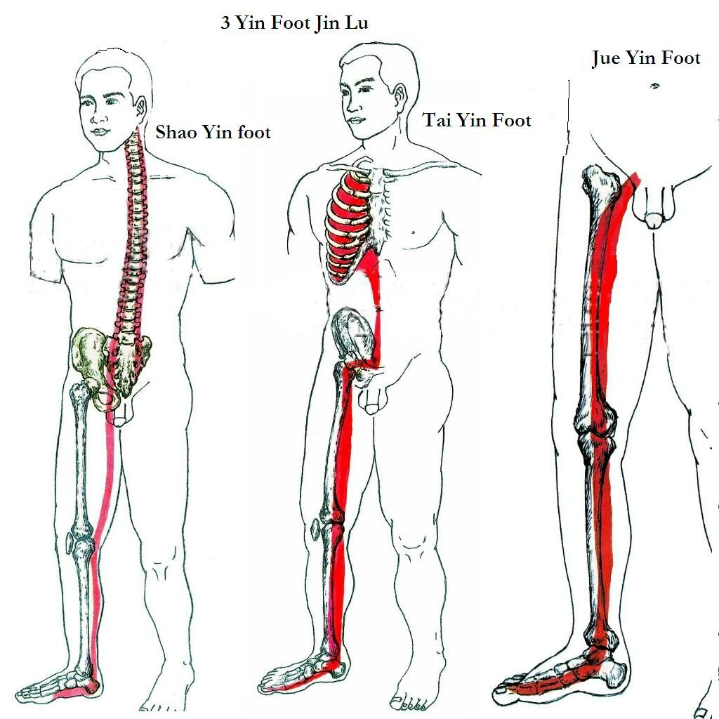 T\'ai Chi Massage: the Inner structure of Bones, Muscles, and Tendons ...