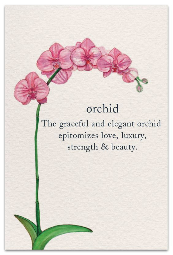 Orchird | Birthday Card | cardthartic.com