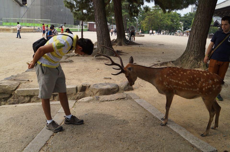 奈良市 Nara