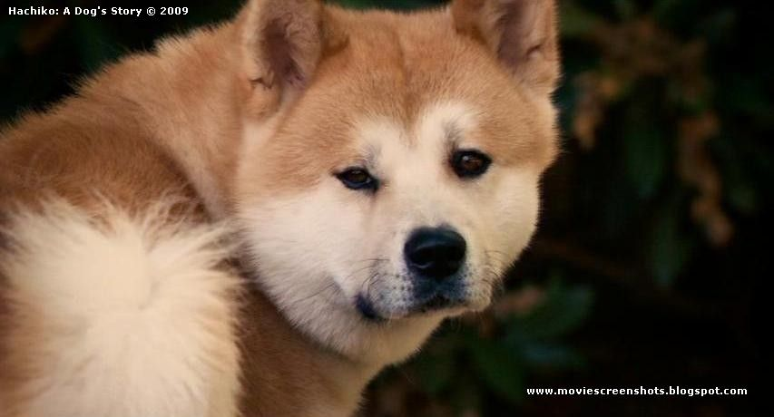 Hachiko A Dog's Story (2009) part [3/3] Dog stories