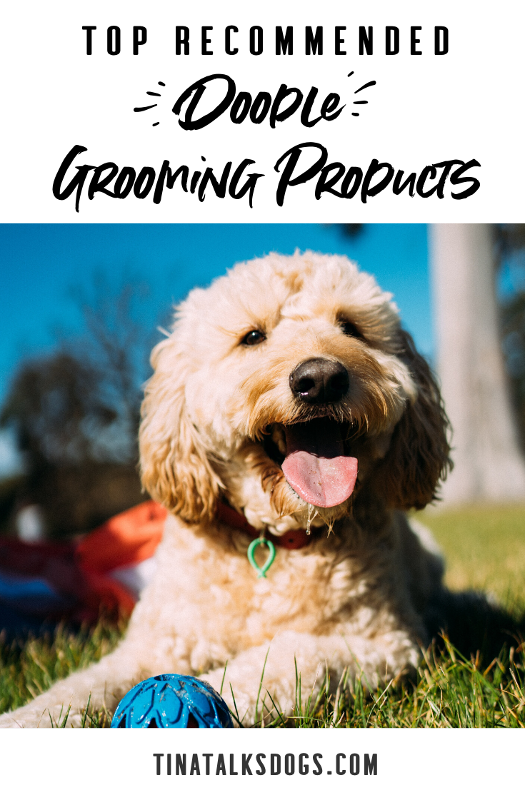 The Fun Dog Grooming Experience of the Doodle Shampoo