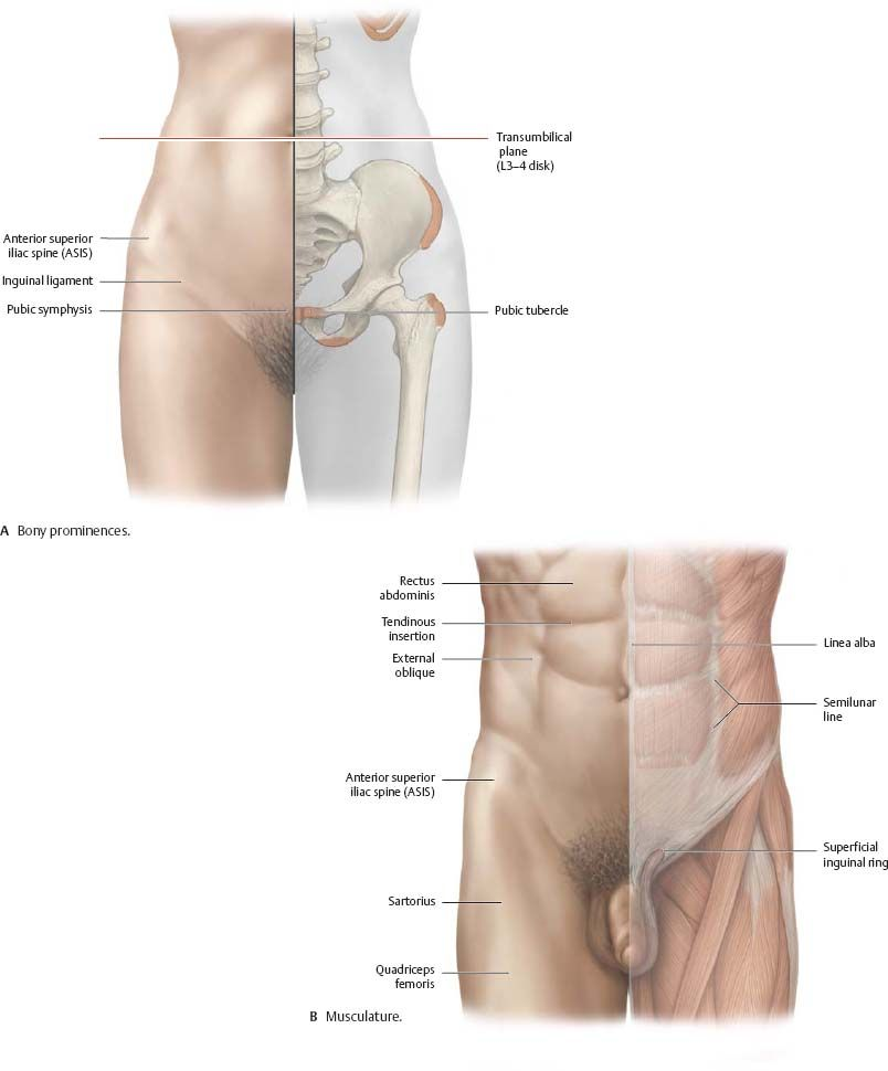 Image Result For Pelvic Muscles Anatomy Surface Female Anatomy