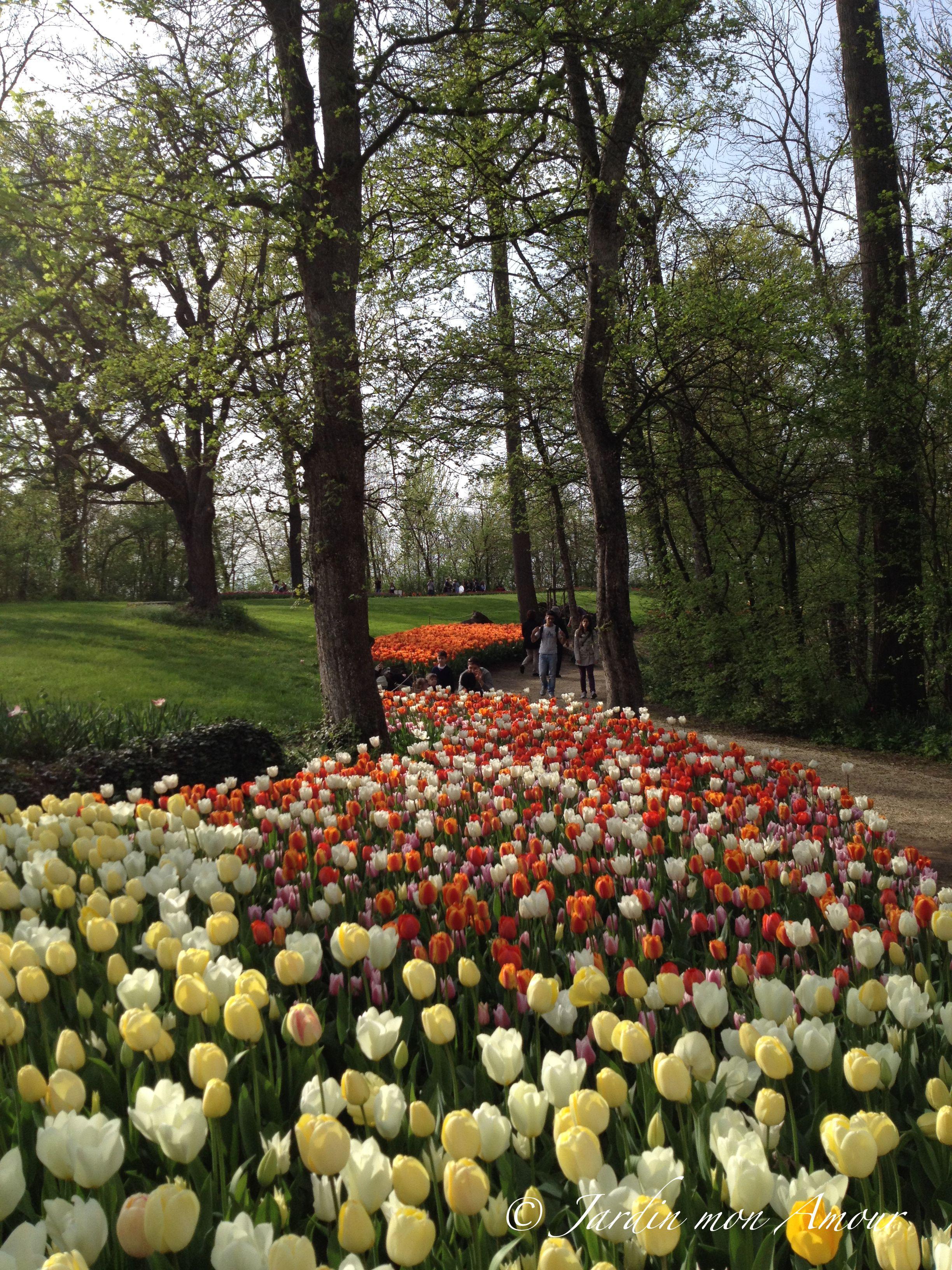 Bordure di tulipani accanto ai viali del parco