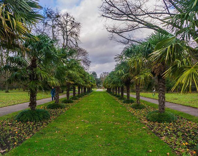 Botanischer Garten In Koln Botanischergarten Koelnergram Koln Flora Palmen Visit Koeln Koelscheecken Garten Igersc In 2020 Botanischer Garten Garten Pflanzen