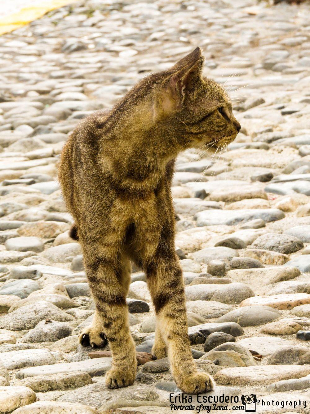 "img scr=""URL de la imagen"" alt=""Panama Casco Antiguo Cats""/"