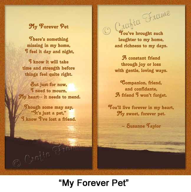 My forever pet