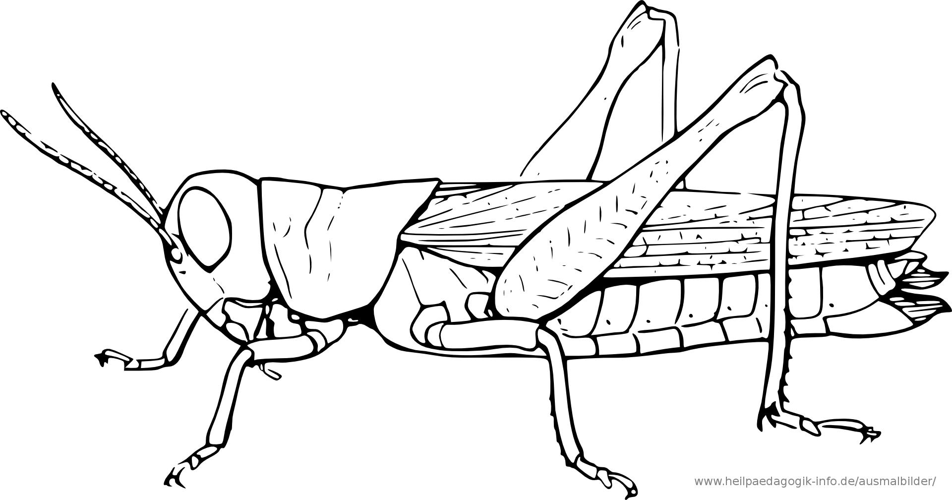 ausmalbilder insekten | ausmalbilder | Pinterest | Insekten ...