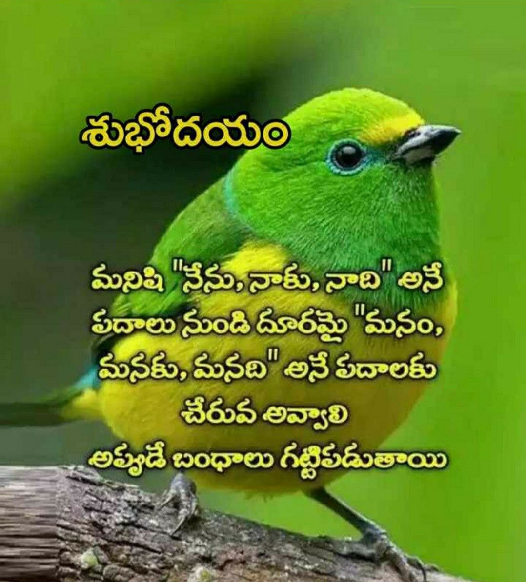 Pin by JONNAGADLA NAGA RATNA on శుభోదయం Good morning