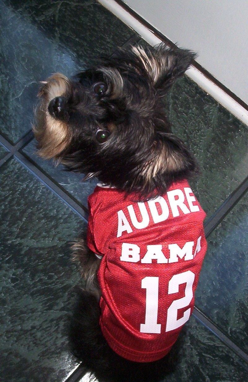 Personalized Dog Jerseys - NCAA!  b1be31b2d