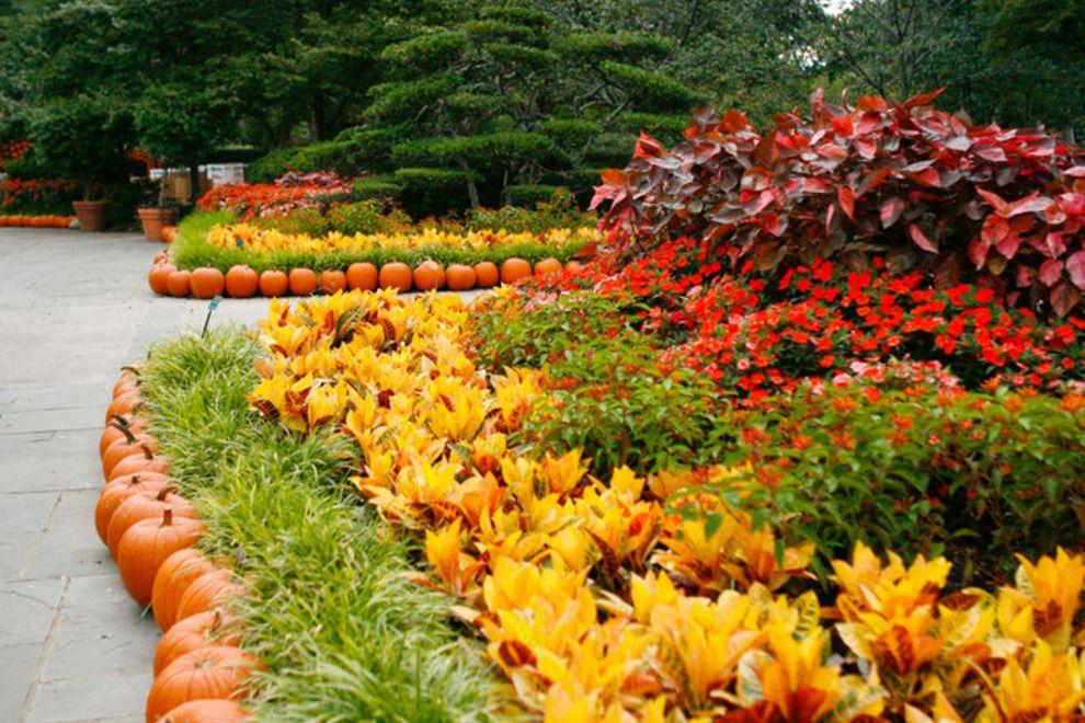 adb0101770b38118ae648685c22a4ffd - Dallas Arboretum Botanical Gardens Dallas Tx
