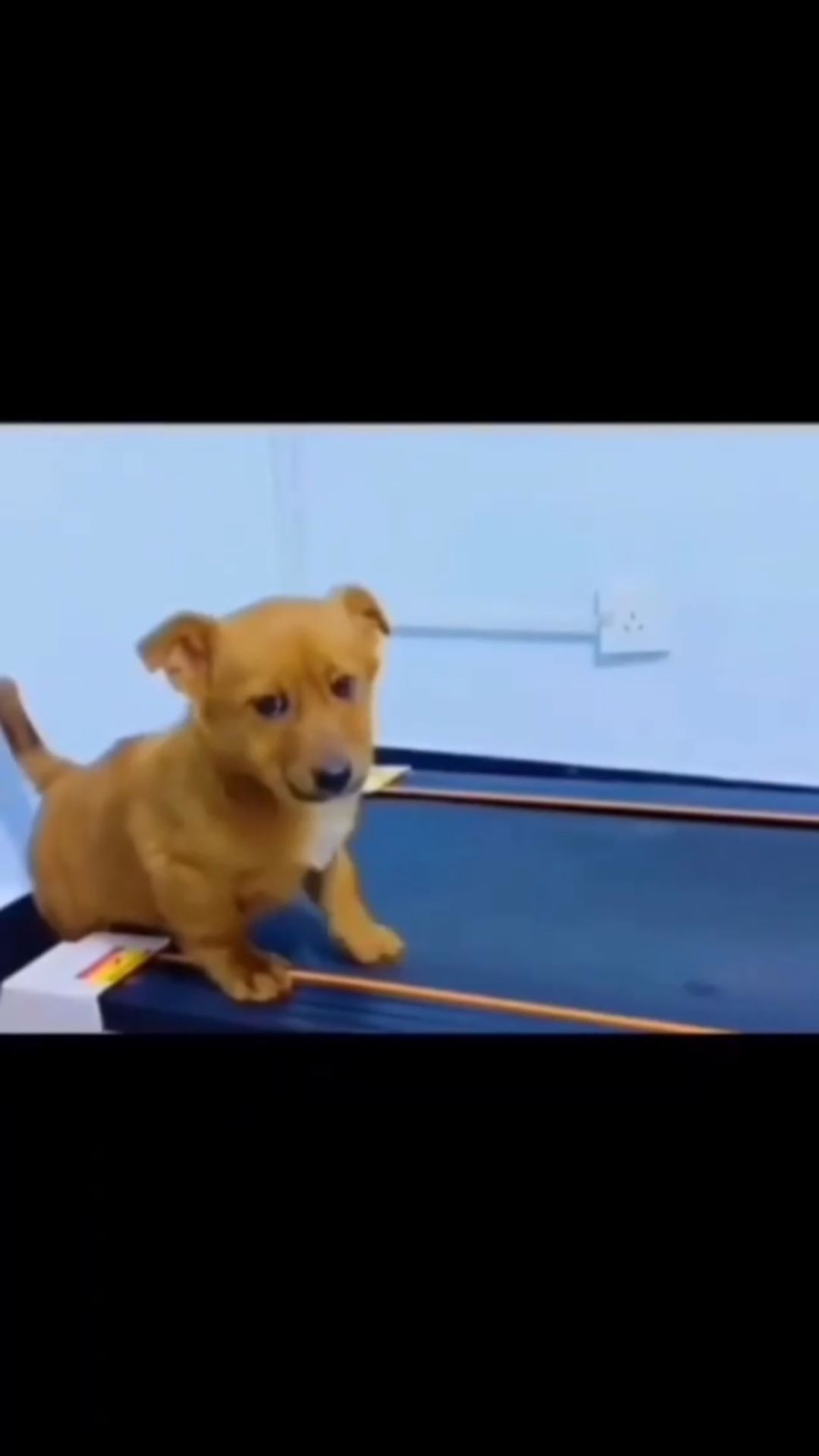 animalifestory on Instagram: This reel makes me want to exercise. Follow @ani for more Credit to: Unknown (DM for credit) #cute #catnap #babyanimals #petsofig…