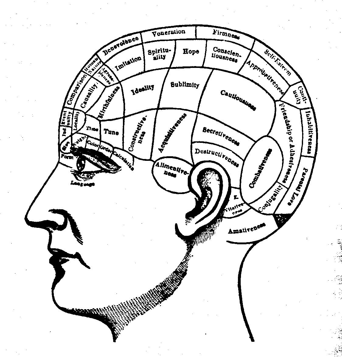 Designs For A Potential New Tattoo Of A Brain