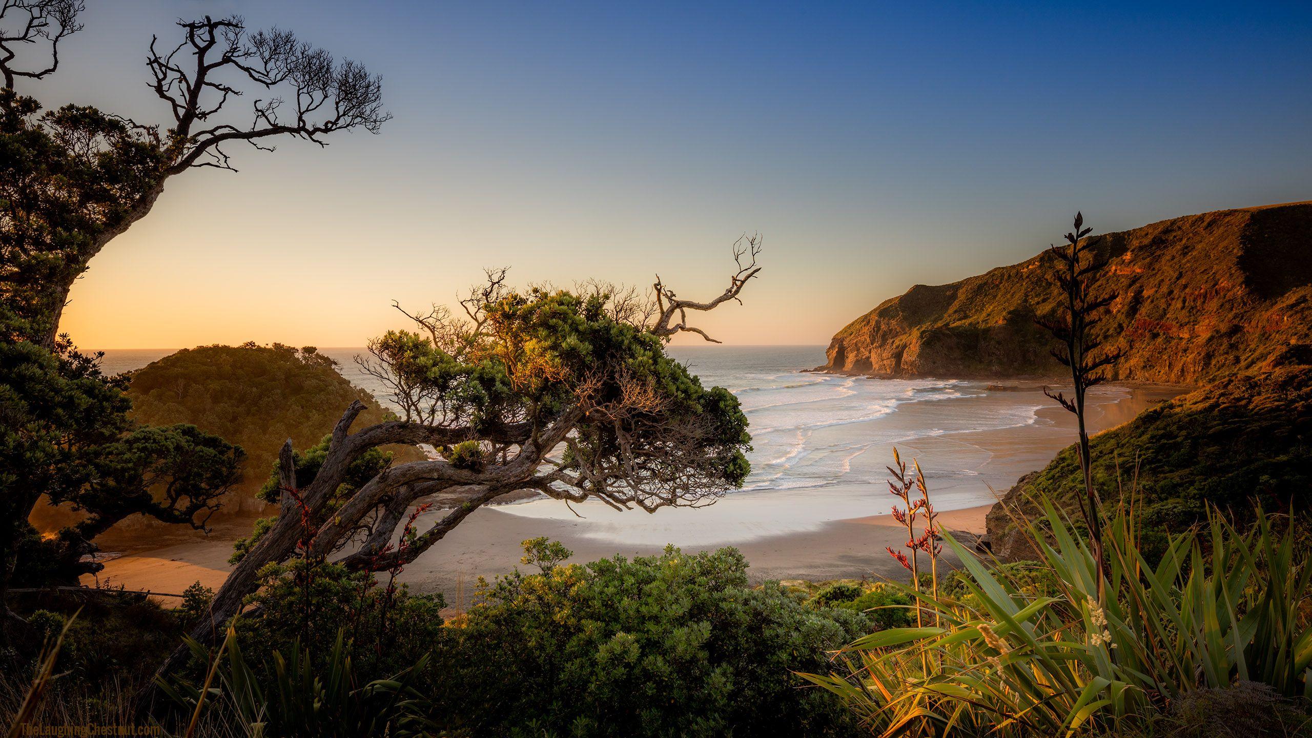 Summer vibes, O'Neill Bay, Auckland, NZ [OC][2560×1440]