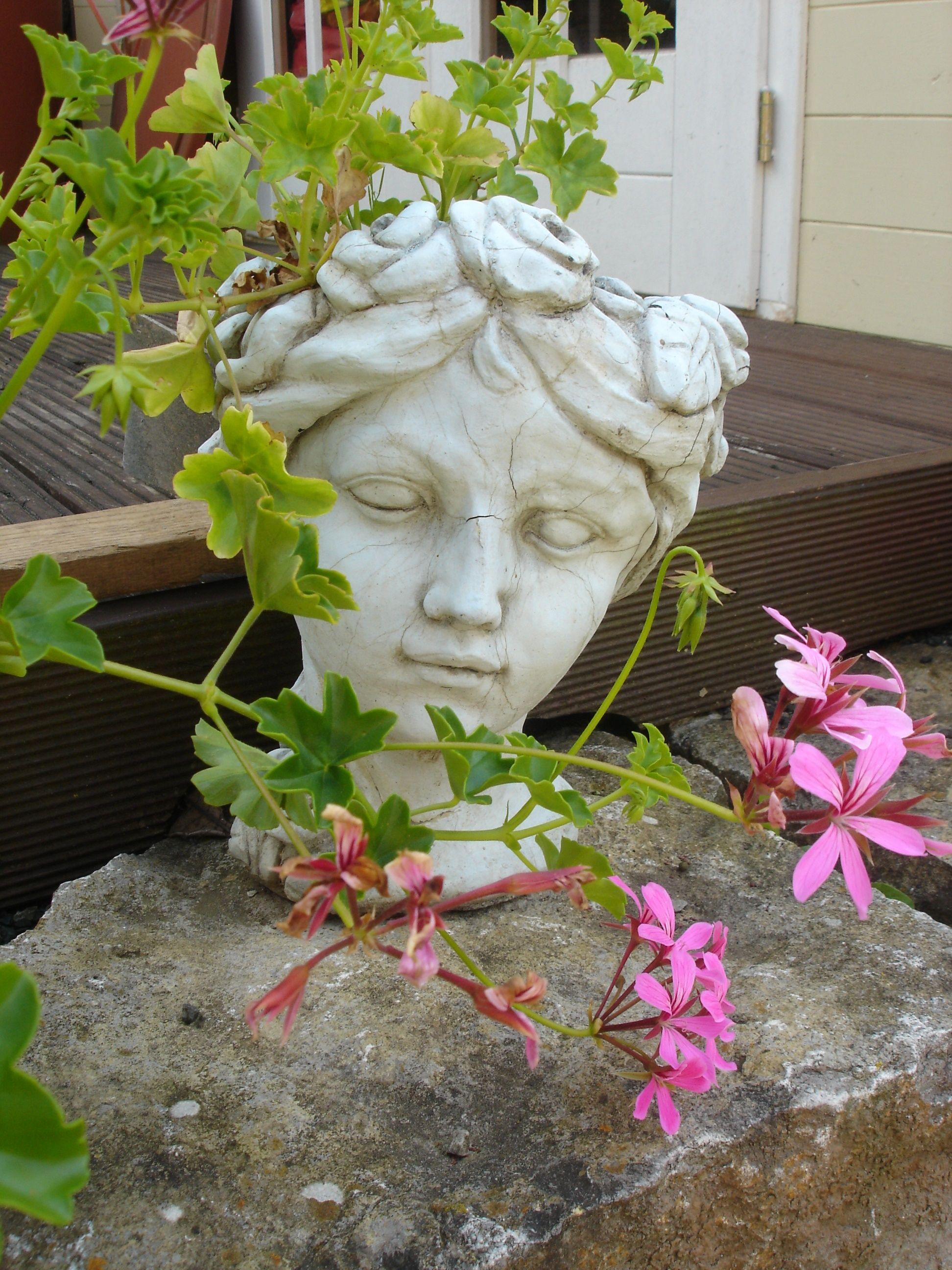 Steinkopf als Blumenkübel   Gartenhaus und Pflanzen   Gartenhaus ...