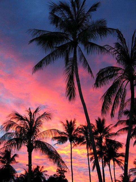 Palm Trees In The Sunset Koh Samui Palm Tree Sunset Sky Aesthetic Sunset Wallpaper