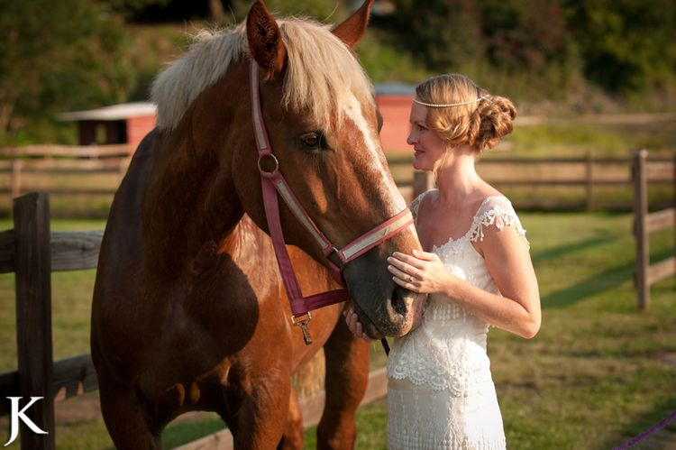 Dr love our carriage horse at hidden river events in
