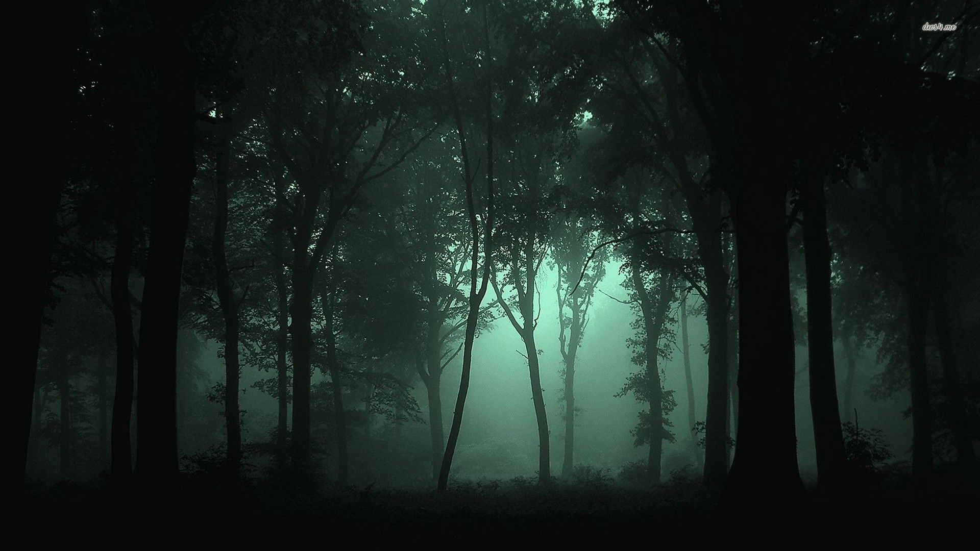 Wallpaper Dark Forest Nature Tree Night Forest Fog