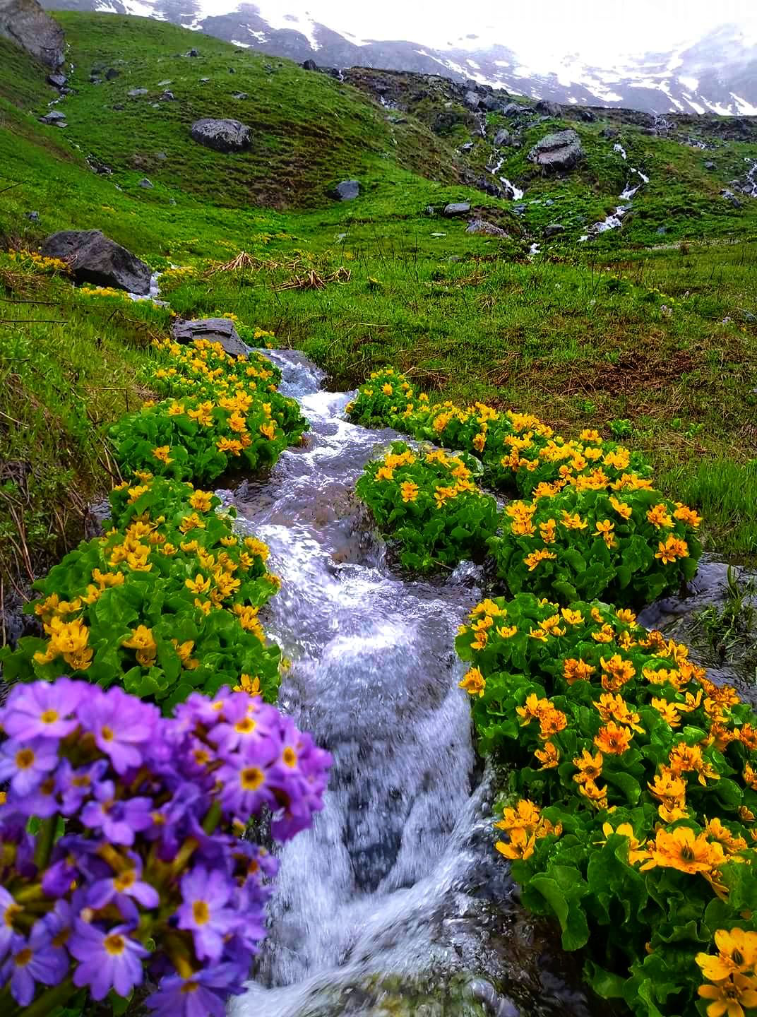 Beautiful Wild Nature In Kurdistan Scenery Photos Beautiful Nature Landscape Photos