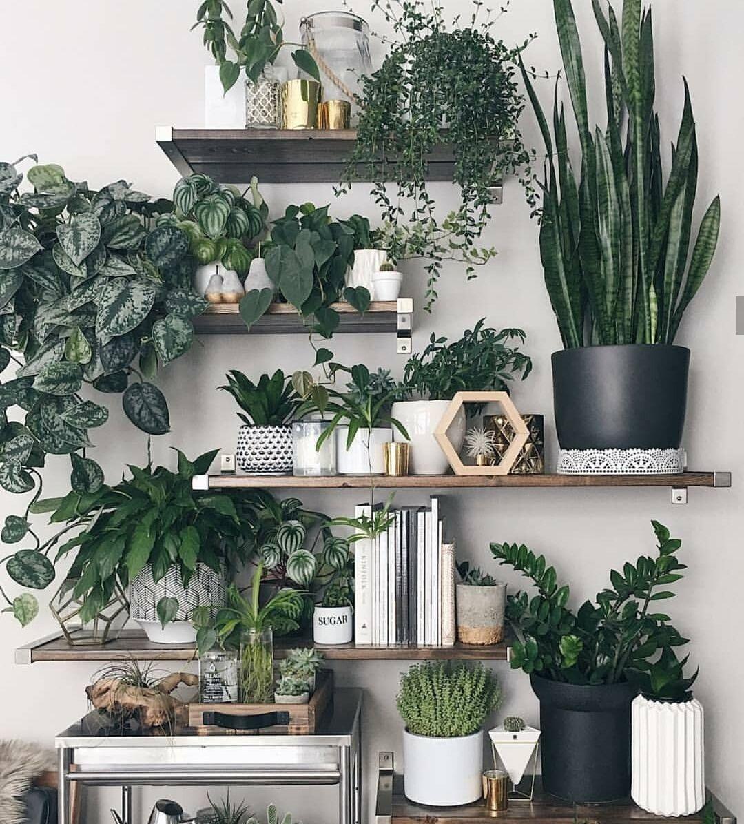 pin von plantura garten ideen tipp auf zimmerpflanzen on sweet dreams for your home plants decoration precautions and options id=63275