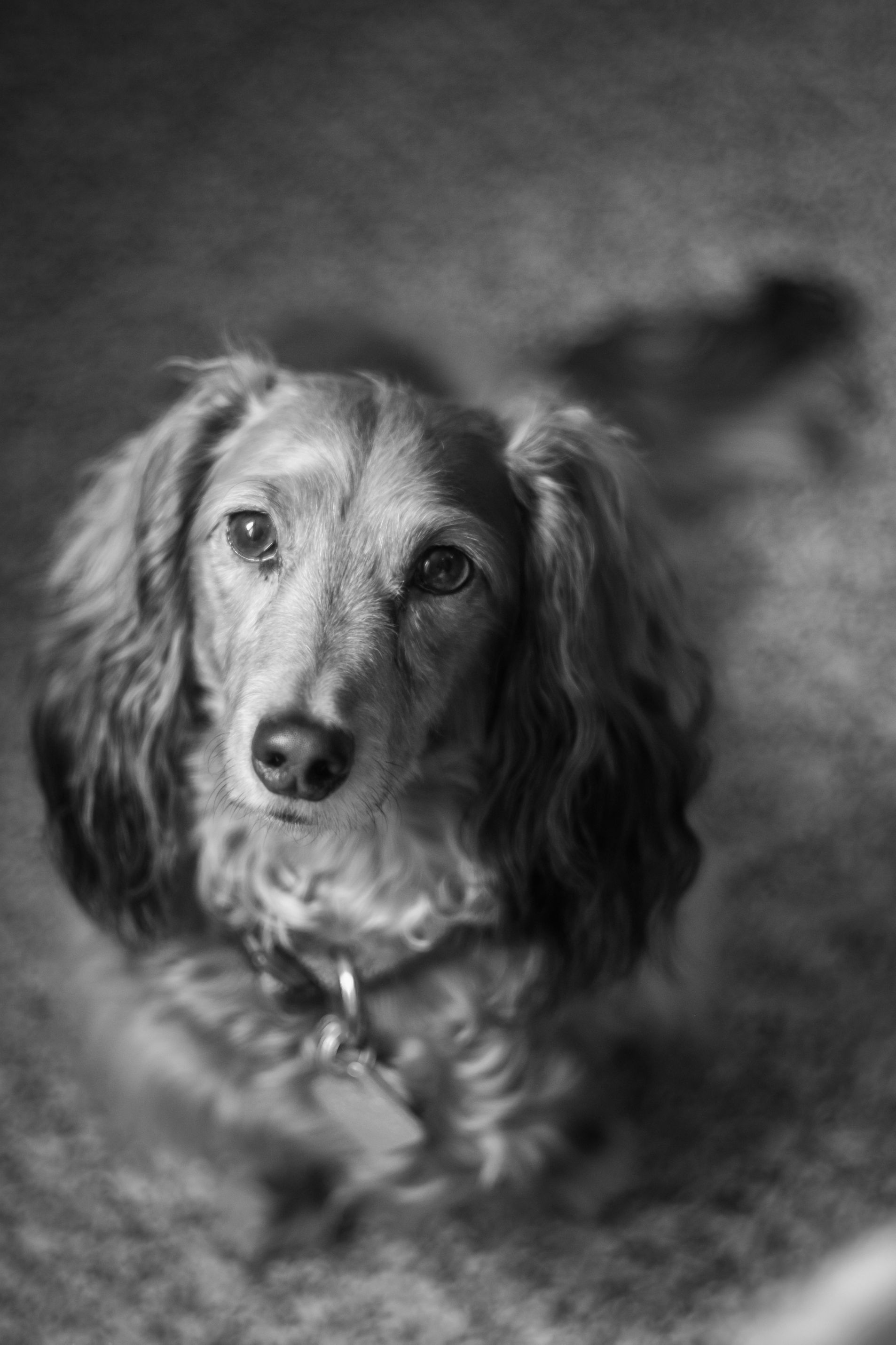 Otto Von Bismarck My Best Friend Vintage Dachshund Dachshund Love Cutest Dog Ever