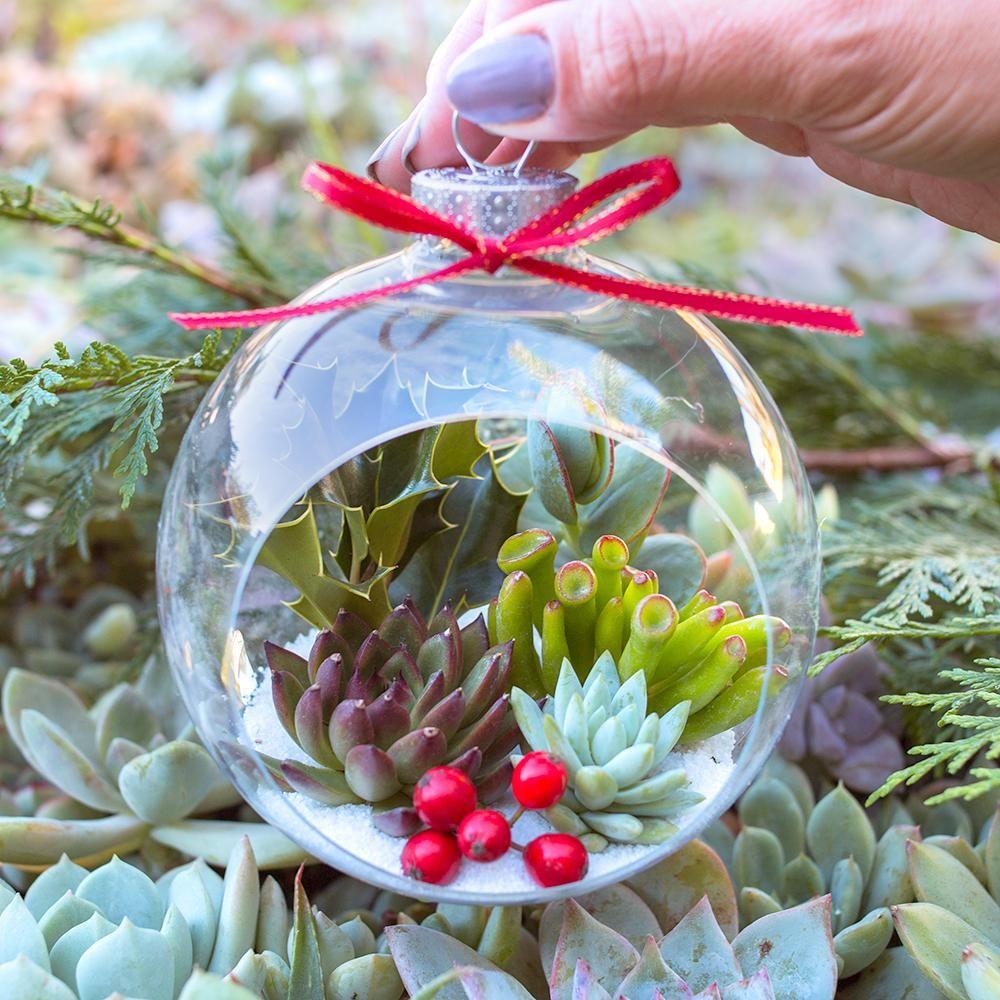 Christmas Succulent Decor.Diy Tutorial Succulent Holiday Ornaments Succulent