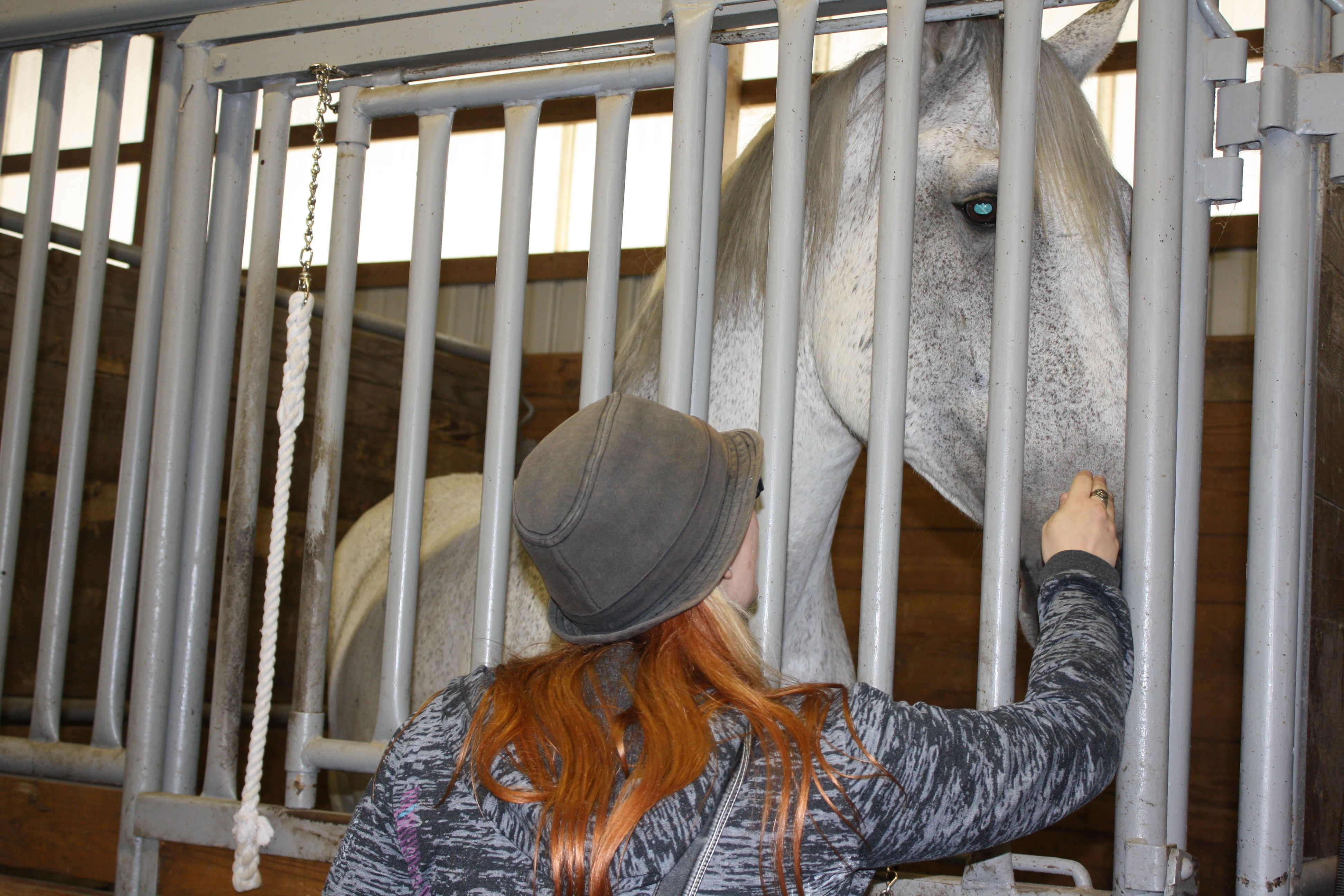 my daughter Ryan making friends with a draft horse