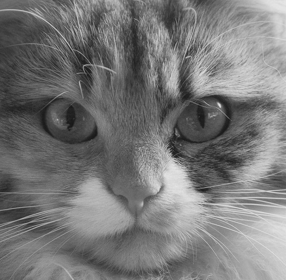 Cute Animals, Beautiful Cats