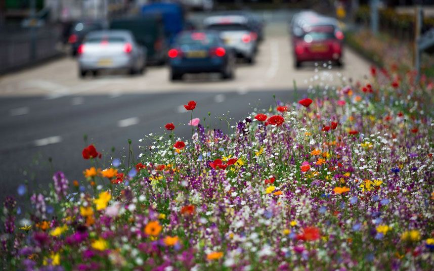 Annual meadows are a low maintenance, experimental style of gardening. Here's how to plant your own
