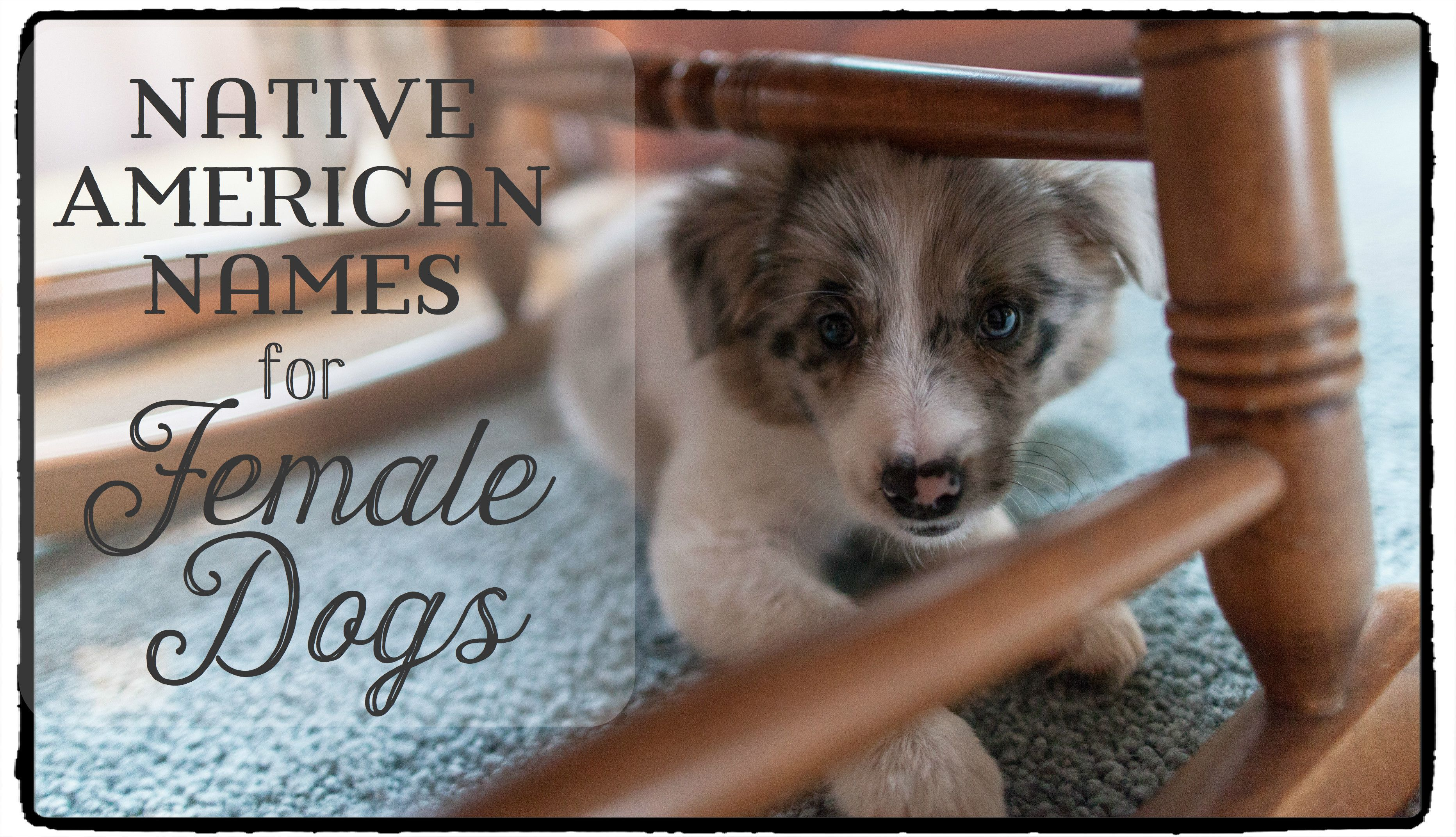 200 Best Native American Names For Female Dogs Female Dog Names Best Dog Names Puppies Names Female