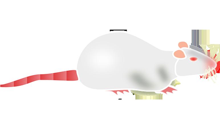 Ponad 25 najlepszych pomys w na pintere cie na temat - Como eliminar ratas en casa ...