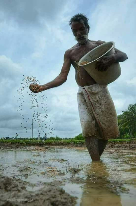 Kerala Agriculture Photography India Culture Indian Photography
