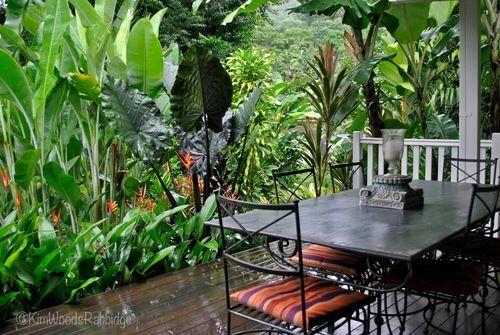Queensland garden landscaping ideas pinterest for Tropical garden designs australia