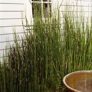 How to Remove Horsetail | eHow