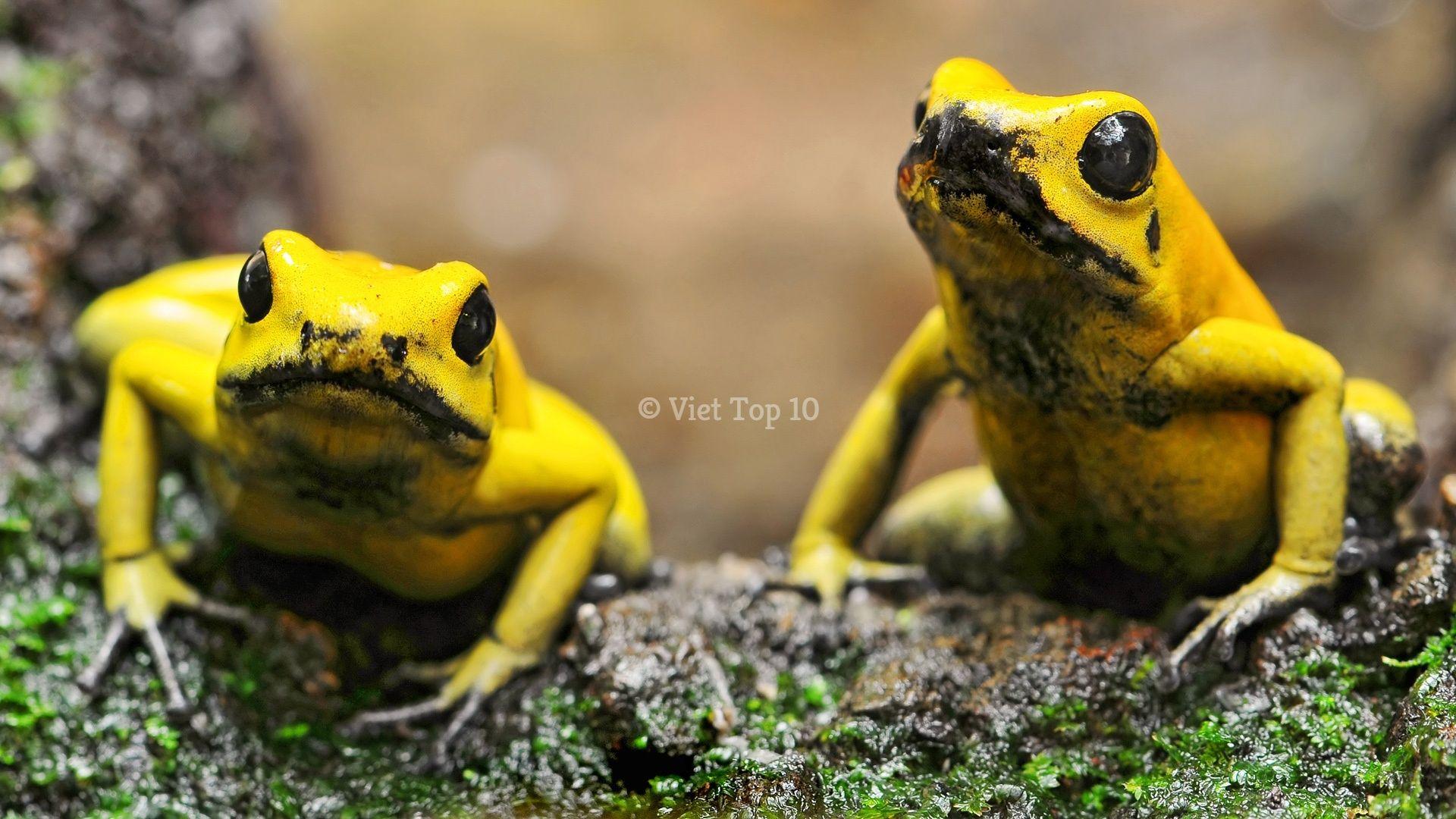 động vật có nọc độc - việt top 10 - việt top 10 net - viettop10