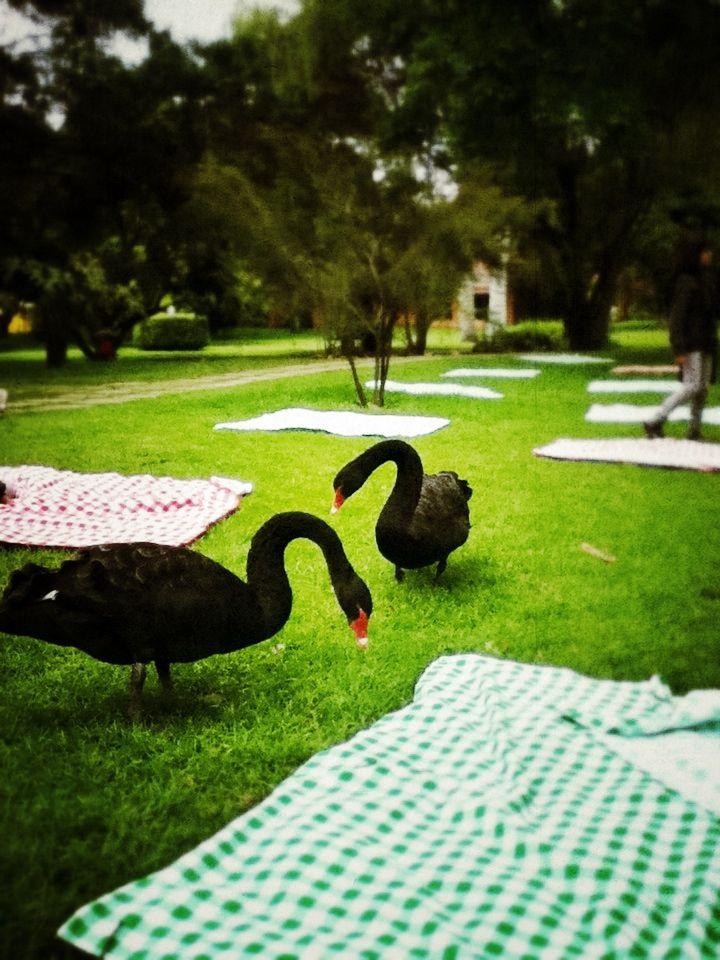 Lugares para picnic en medellin