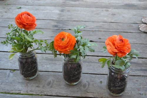 Simple Ranunculus Flowers in Mason Jars for Guests to take home