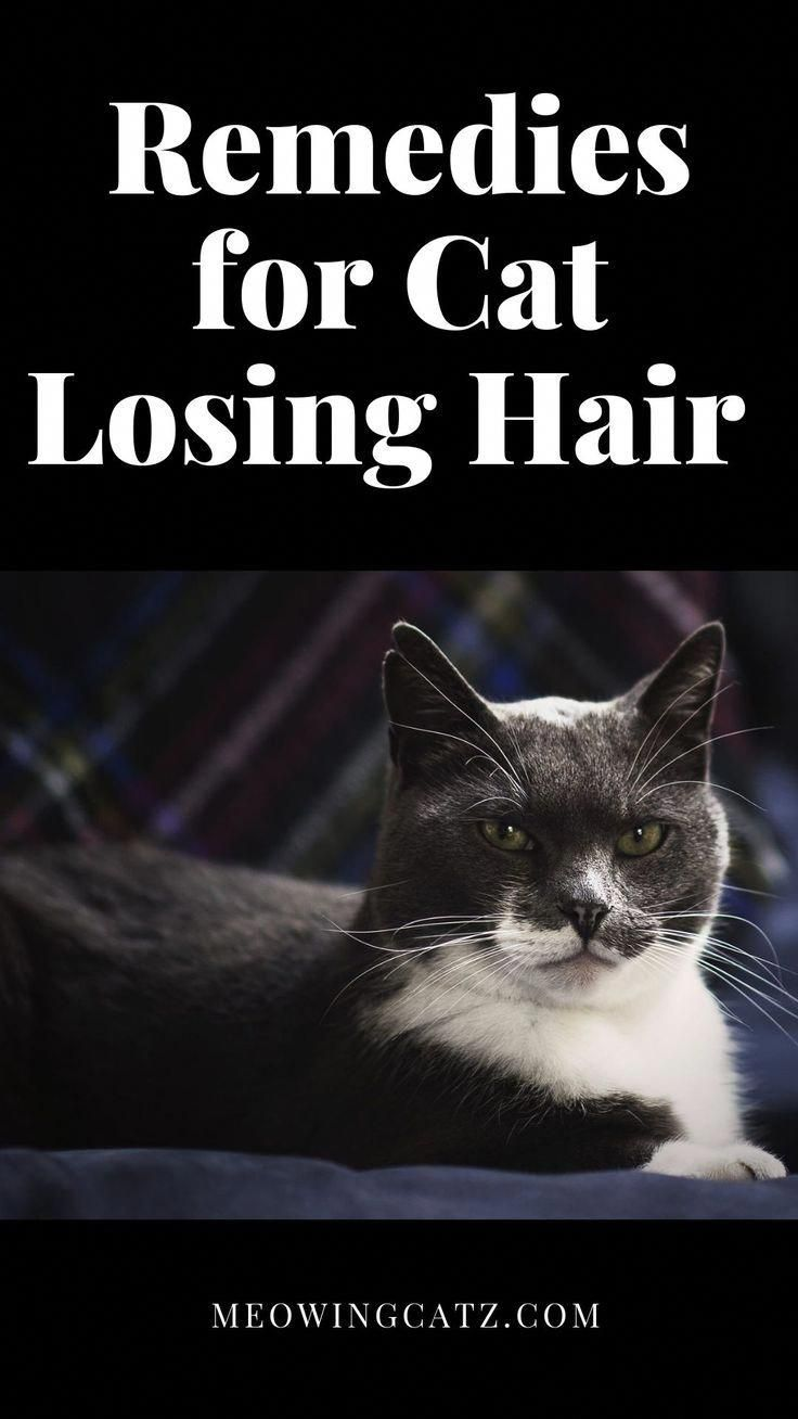 What can I do about my cats hair loss? This is a guide about remedies for cat losing hair. #love #cat #kitten #catlove #pets #pet #NaturalShampooForHairLoss