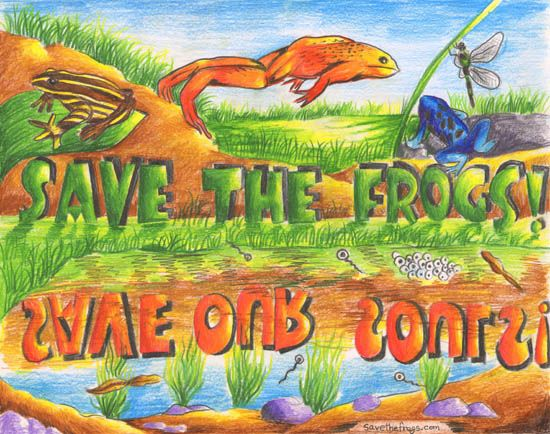 Frogs Art from India SAVE THE FROGS! Art Contest www.savethefrogs.com/art/2011