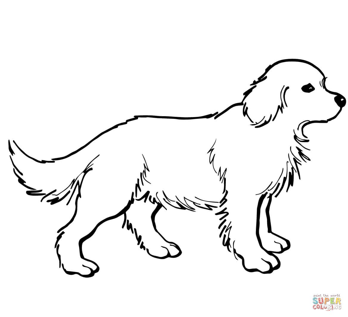Golden Retriever Puppy | Super Coloring | Dog coloring ...