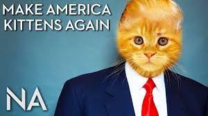 Image result for make america kittens