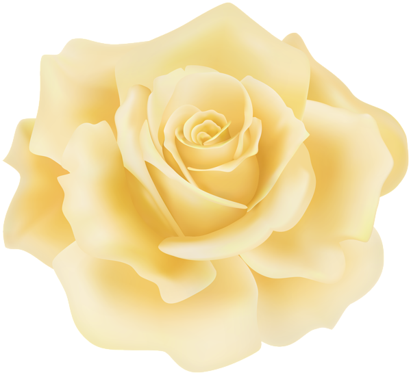 Delicate Yellow Rose Png Clipart Yellow Roses Rose Clipart Clip Art